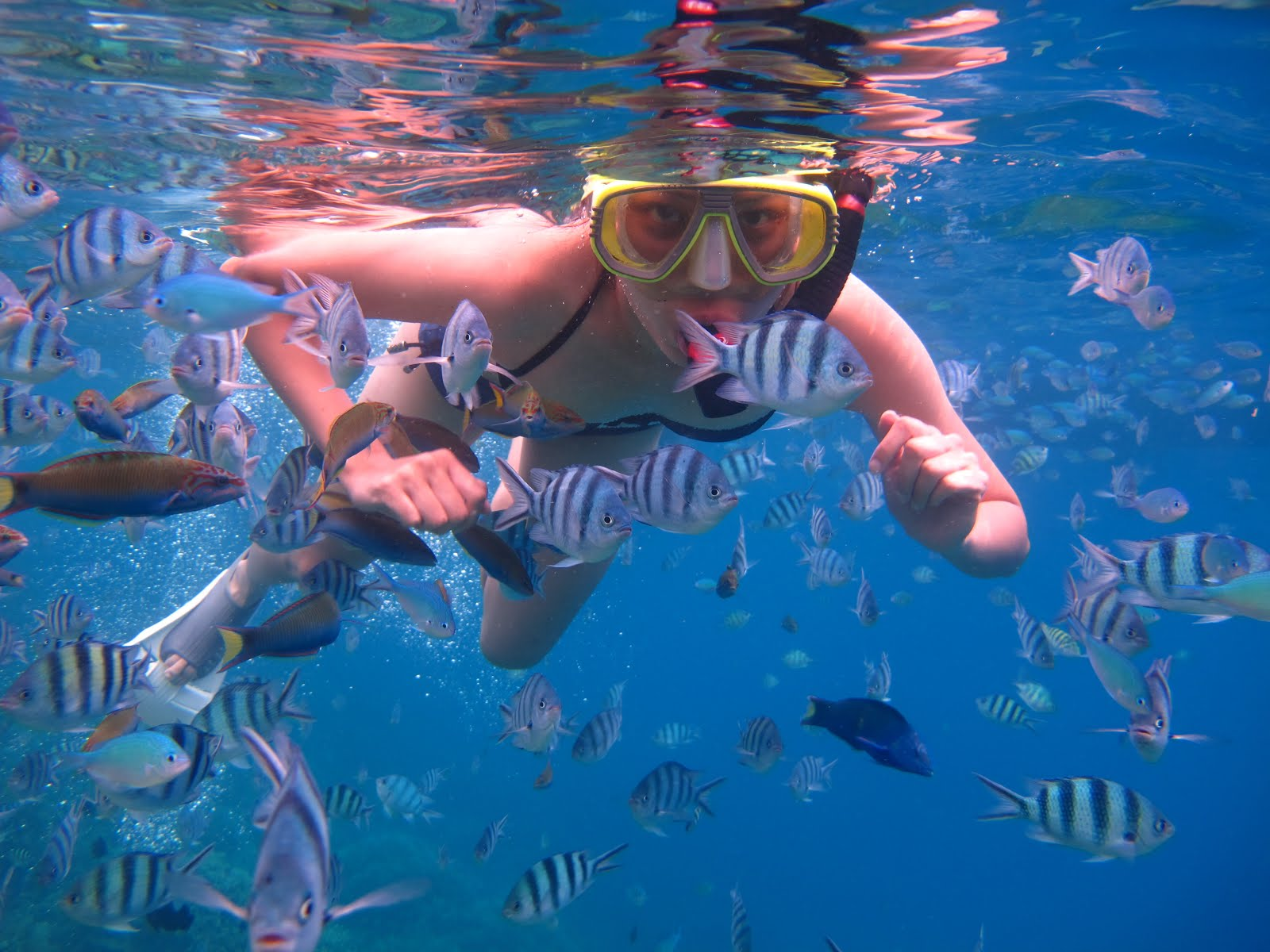 Snorkeling trip by Glass Bottom Boat Lombok and Gili Island