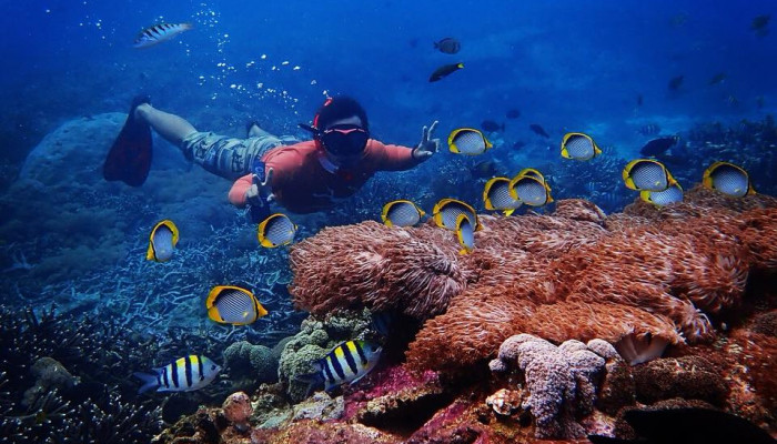 PACKAGE A SNORKELING DAY TRIP FORM BALI TO NUS... - Bali Travel Online