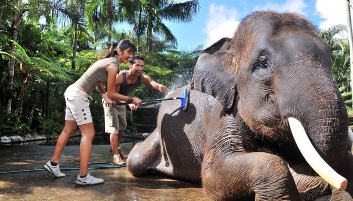 Hasil gambar untuk jumbo wash elephant bali